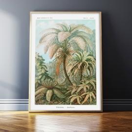 Tropiki (1904), 50x70cm