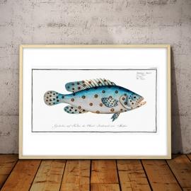 Niebieska ryba (1904), 50x70cm